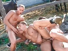 Joe, Thomas & Istvan gain hungry thinking of horse-hung cocks